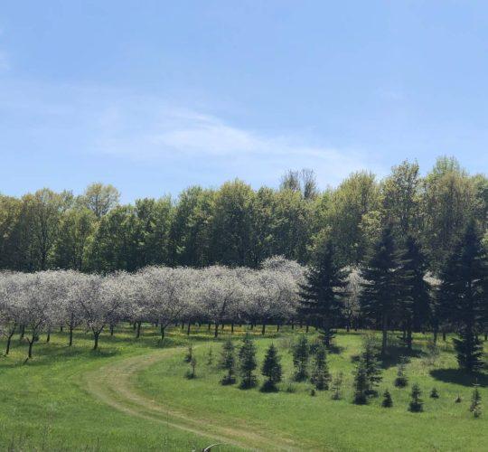 Rocky Top Farms - Northern Michigan Cherry Farm